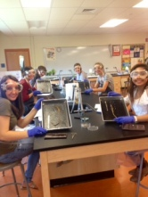 Worm dissection 1