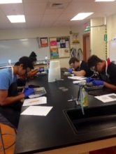 Worm dissection 2